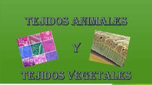Biologia, tejidos animales y vegetales